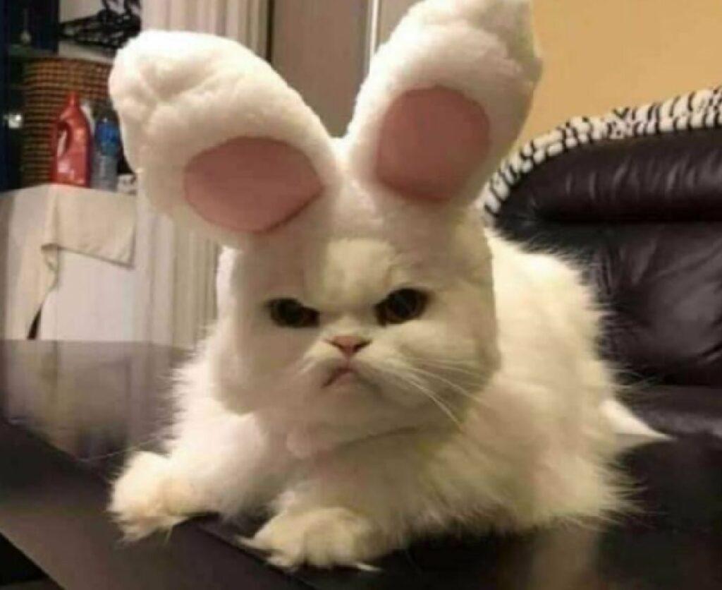 gatto poco felice situazione