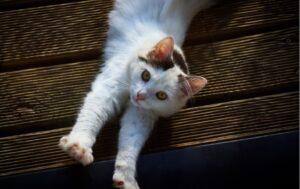 gatti che sono l'antitesi del viso pulito