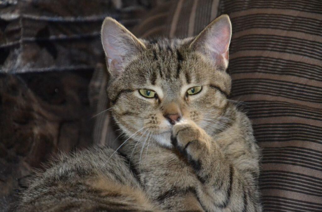 gatti colti in momenti poco adatti