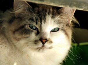 gatti così strani per i quali non capiamo alcuni comportamenti