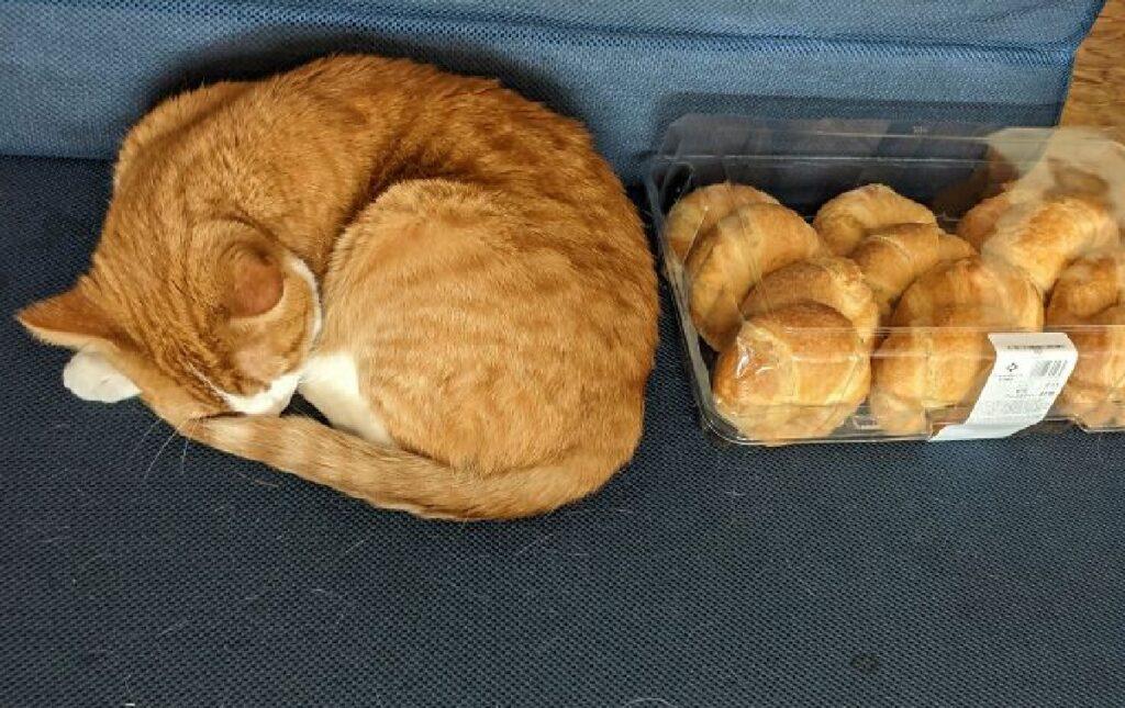 gatto assomiglia a cornetti