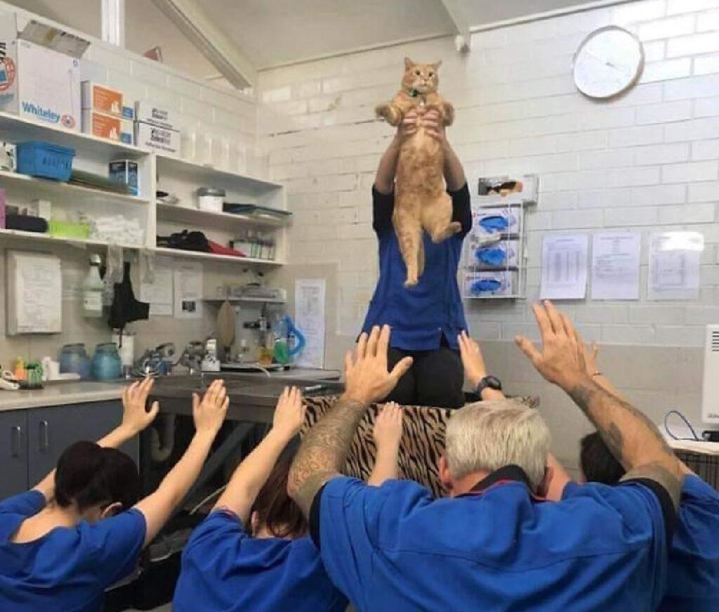 gatto viene elevato in aria