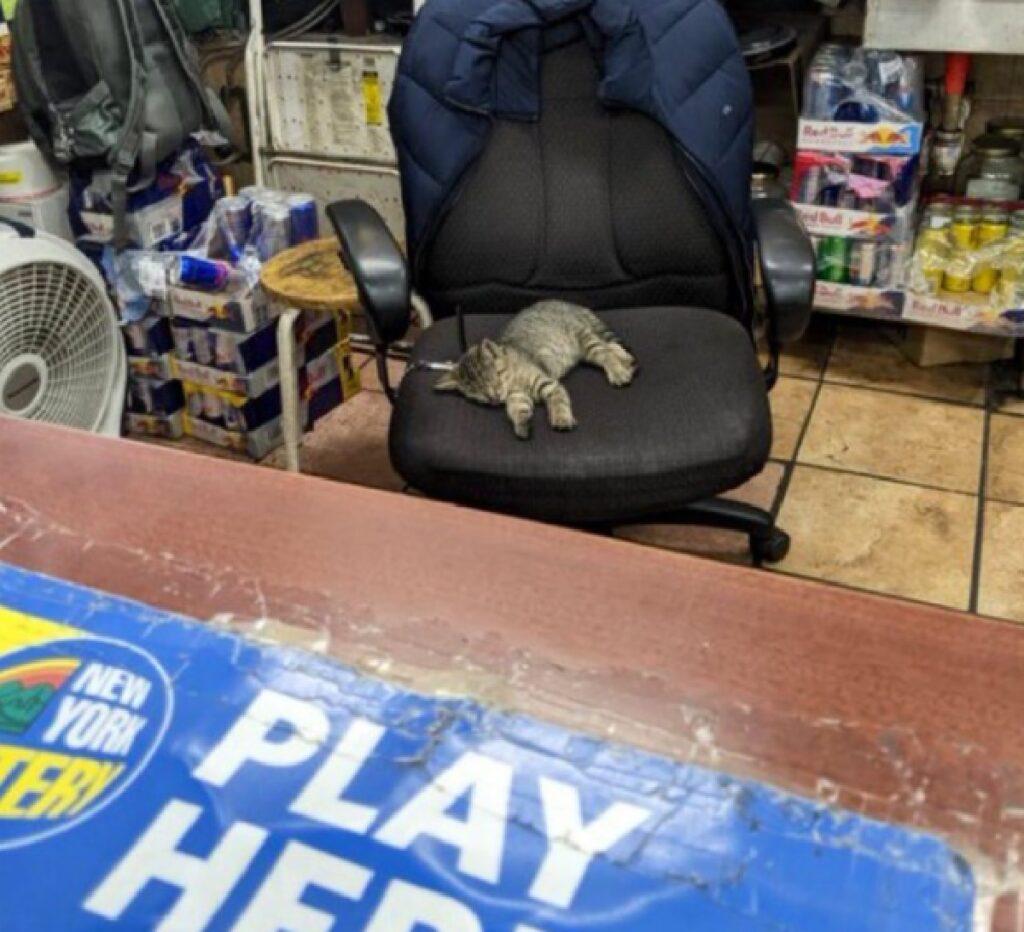 gatto dorme seduto su sedia
