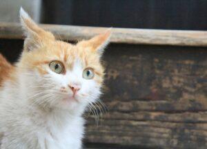 gatti diventati gestori di locali