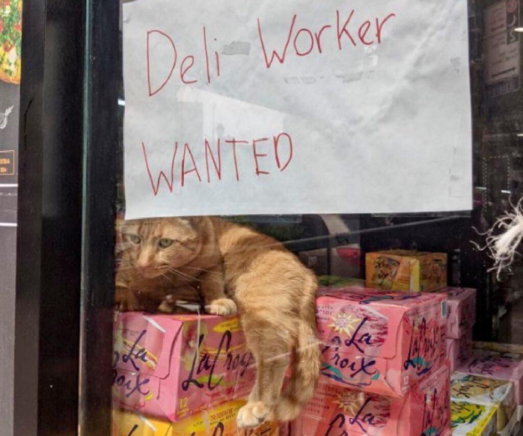 gatto rosso su scatole