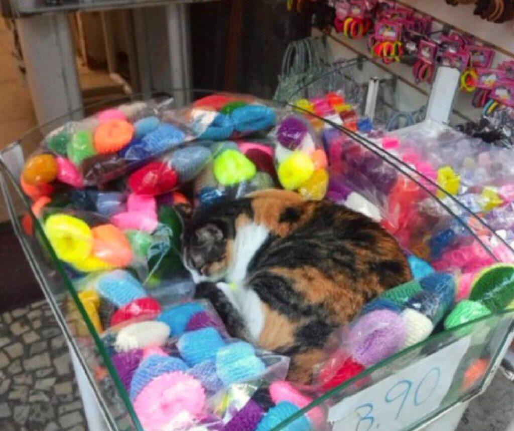 gatto su piccole cose colorate