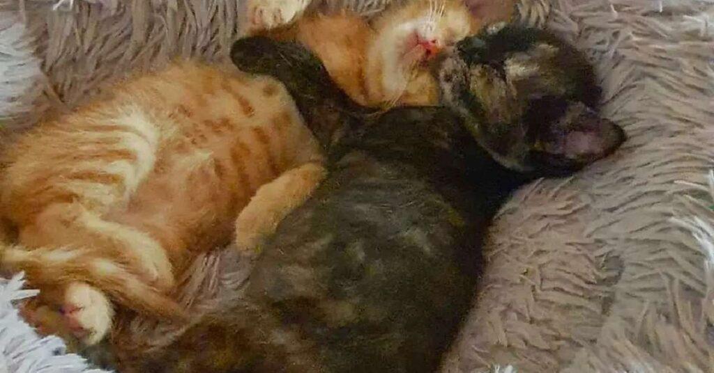 micie che dormono insieme