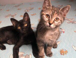 coppia di gattine
