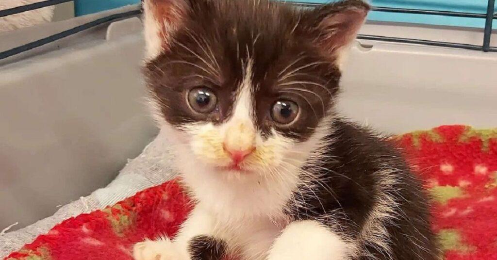 gattina dentro una gabbia