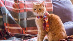 gatto Bob con la sciarpa
