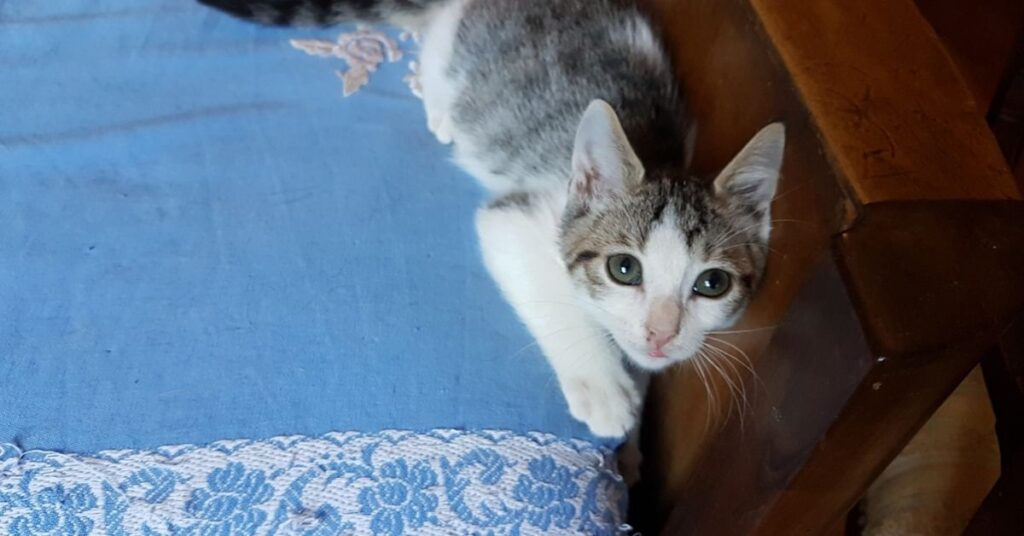 gattino sdraiato sul letto