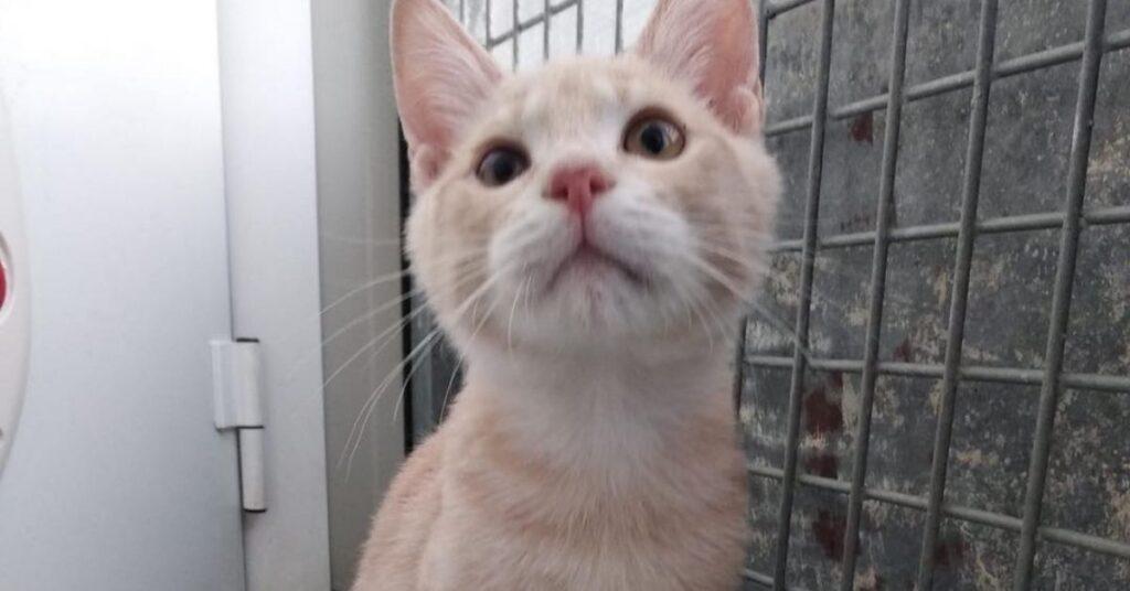 gattino nel box
