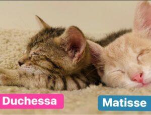 coppia di gattini che dorme