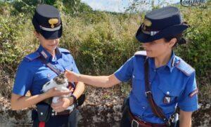carabinieri con gatta