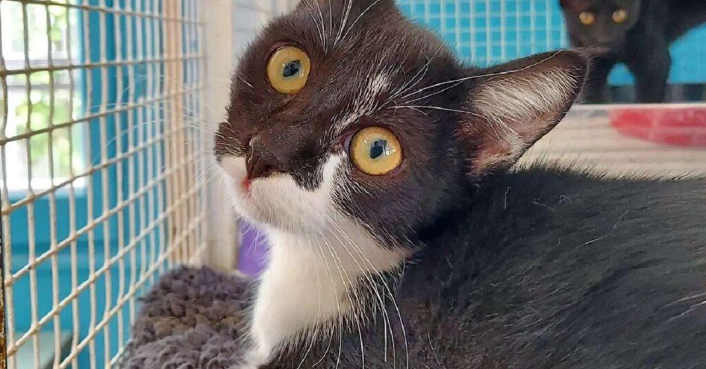 gatta che guarda la volontaria
