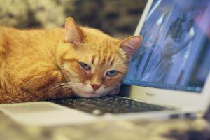 gatto arancione