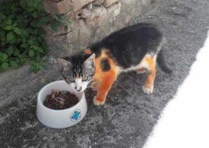 gattino colorato di rosso