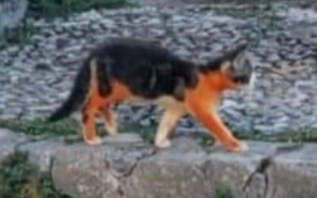 gattino con le zampette colorate di rosso