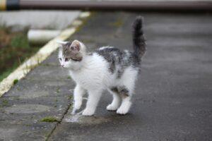 gattino randagio per strada
