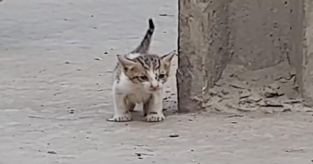 gattino randagio disperato
