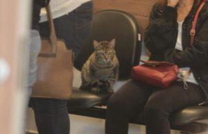 opera il gatto in chiesa