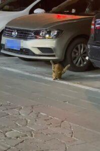 gatto randagio con zampe al contrario