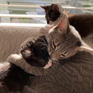 bubblegum gatto abbraccia tutti