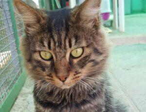 gatto osserva