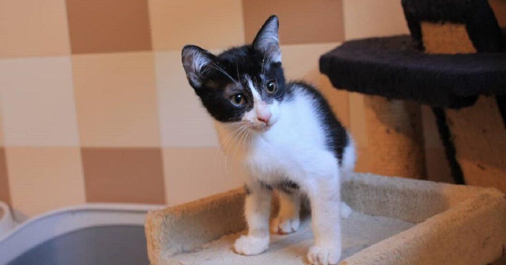 gattina di soli 3 mesi