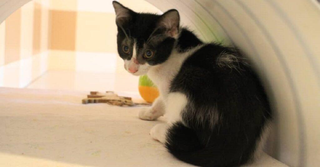gattina nella sua cuccia