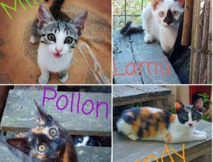 quartetto di gattini