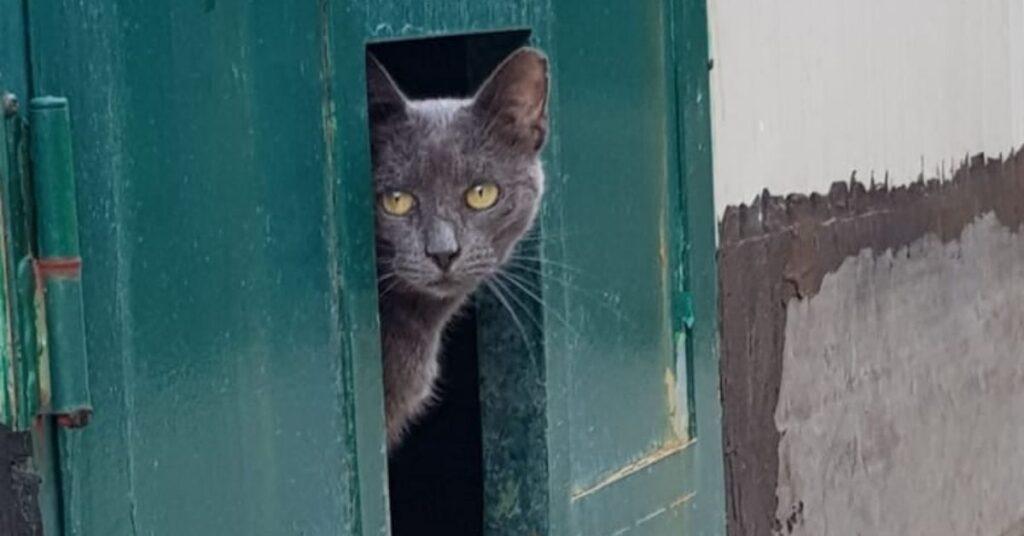 gatto sull'uscio della porta