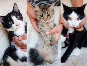 terzetto di gatti