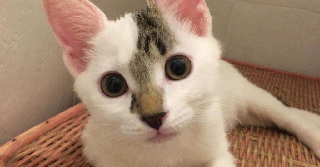 primo piano di un gattino