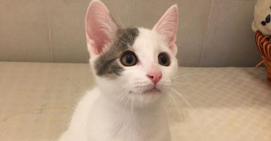 dolce gattino che osserva