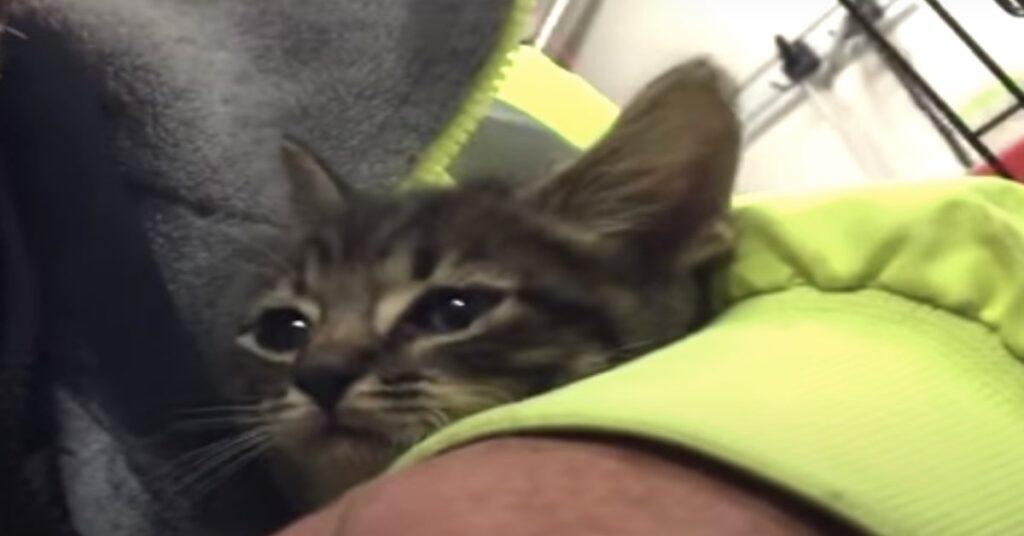 gattina intrappolata in una fogna salvata