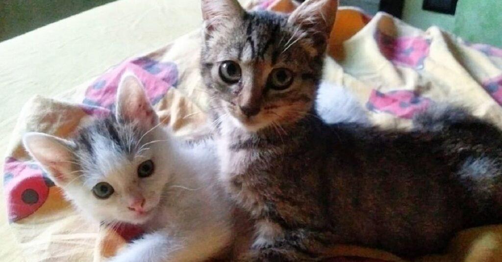 gattini cercano una famiglia