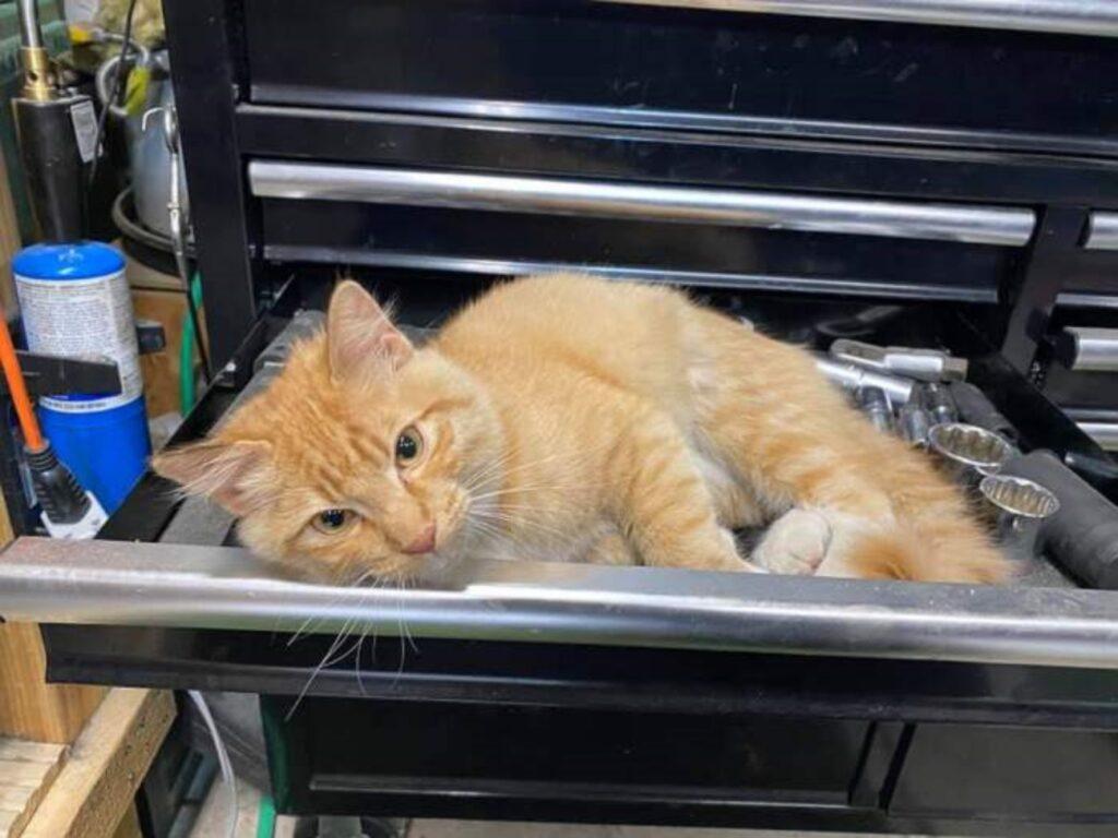 sally dentro cassetta degli attrezzi