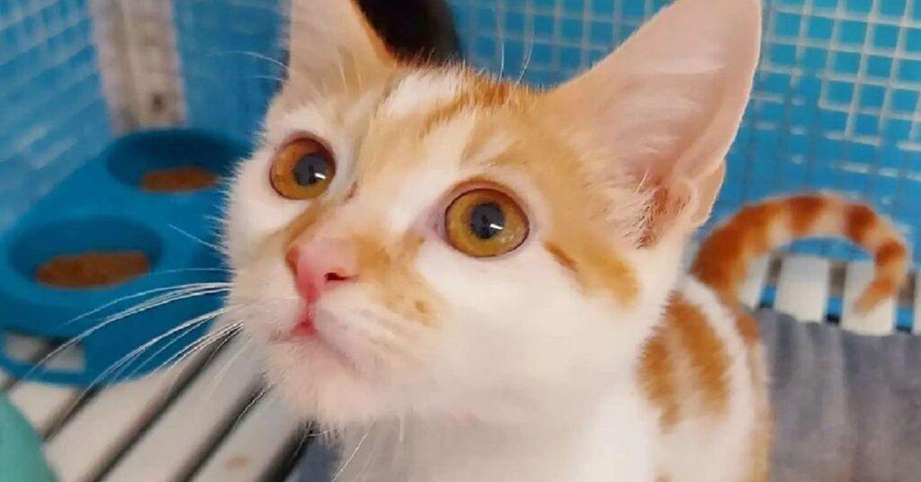 gattino all'interno della gabbia nel canile di Treviso