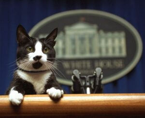gattino alla casa bianca
