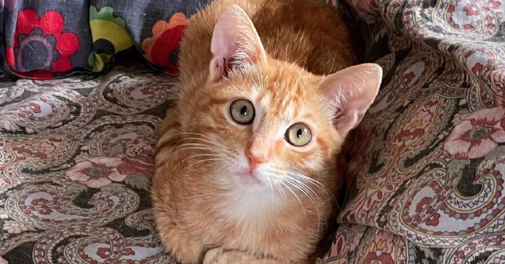 gattino dagli occhi grandi e verdi