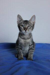 adorabile gattino cerca casa