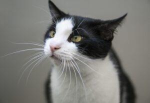 smarrita gatta di 12 anni