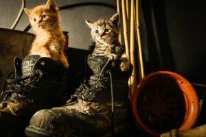 gattini in coppia