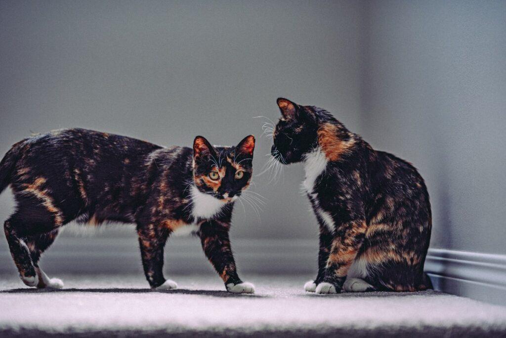 gatti e dinamiche casalinghe