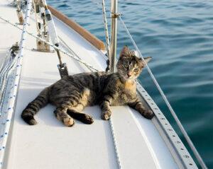 gatto a a bordo di una barca