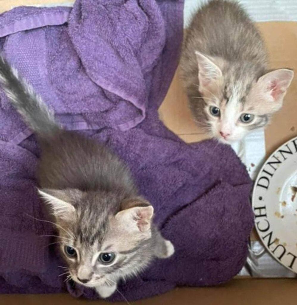 due gattini randagi