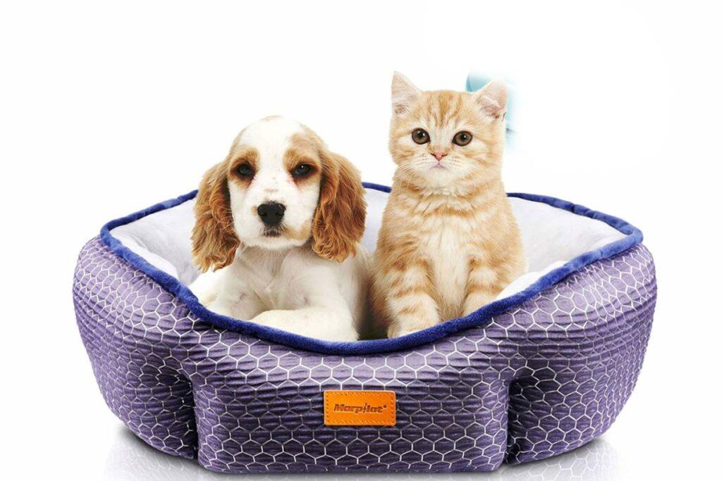 cane e gatto nella cuccia