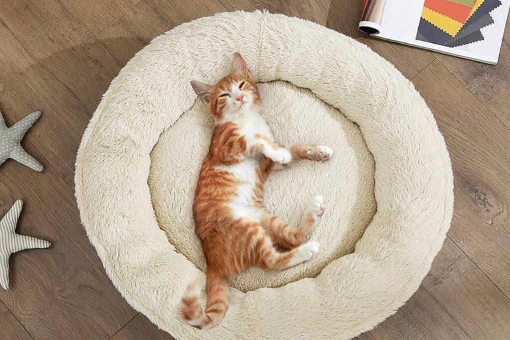 ciambella per gatto