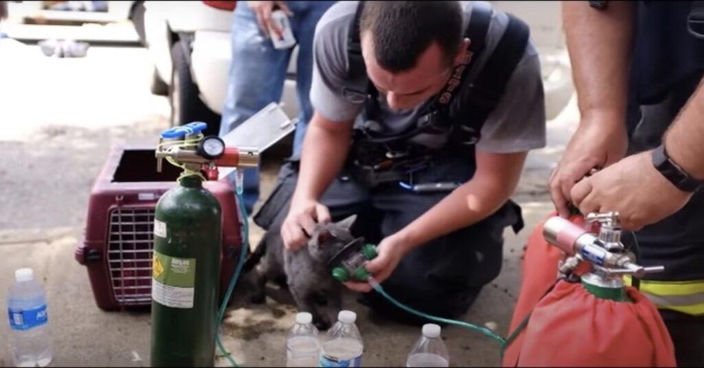 gatti rianimati dai pompieri